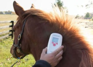 MicroChipping, Horse Health: EPR Tracking and Microchipping a Superior Form of Identification, HPAB Process (C) | Environmental Recycling
