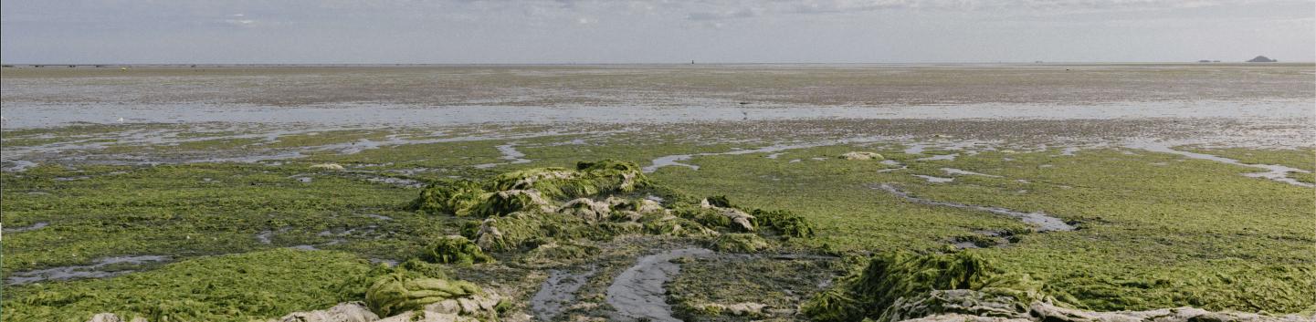 European pollution Baltic sea blue green algae 2- Page HiPoint Agro Bedding