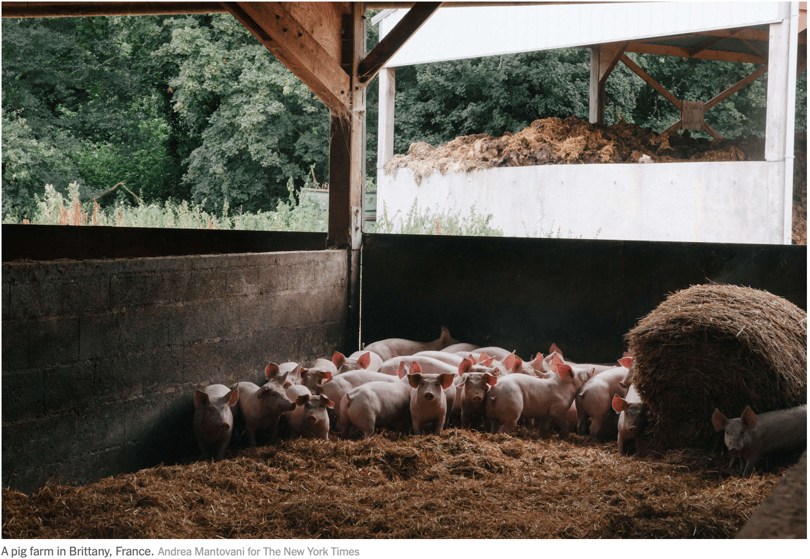 European pollution - Pig Farm - page - HiPoint Agro Bedding Corp